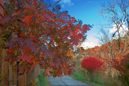 road autumn trees red sky fall nature leaves forest landscape exterior ar path bluesky arkansas ozarks bushes external eurekasprings