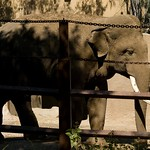 Los Angeles Zoo 069