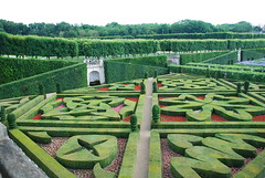 shrub, garden, grass, maze, hedge,