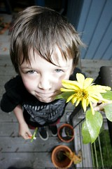 kinder gardener nick and his blooming sunflower    M…