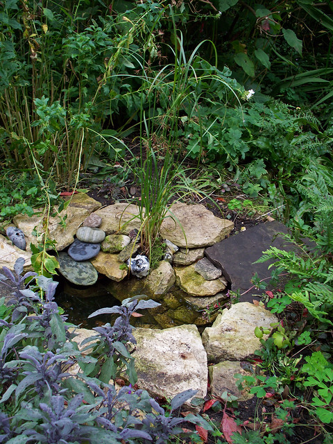 New wildlife pond flickr photo sharing for Tiny garden ponds