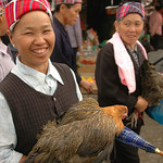 Miao Woman with Chicken - Guizhou Province, China