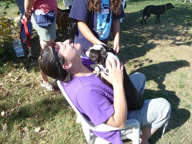Bosley S Dog Grooming