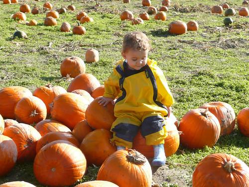 2008-10-27 pumpkins (6)