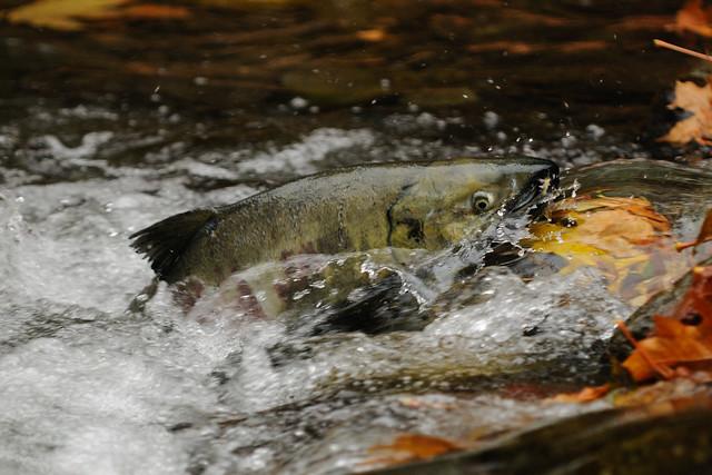 Bc Sport Fishing Regulations Vancouver Island