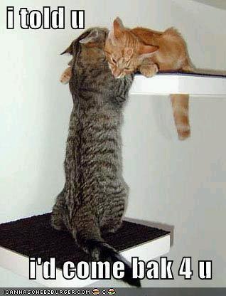 rescue lol cat
