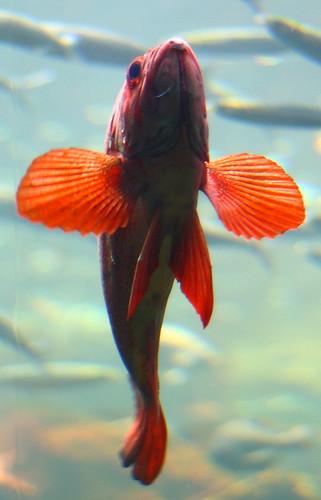 Steinhart Aquarium 008