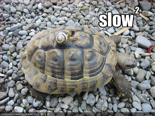 funny-pictures-a-snail-rides-a-turtle-and-together-they-are-extra-slow