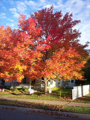 favorite front yard trees | Flickr - Photo Sharing!