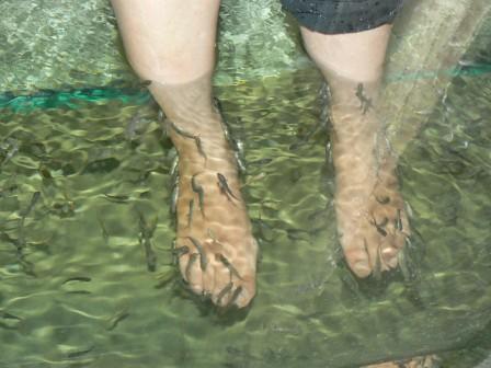 A fish foot massage at the night safari singapore for Fish foot massage