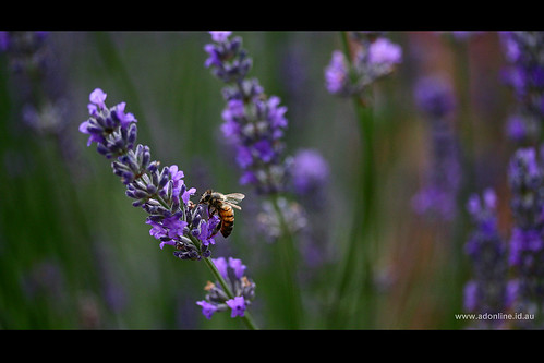 Small Bee Bokeh