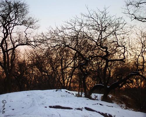 park nyc trees snow ny cold sunrise fun pentax manhattan central kiwi jjp k200d