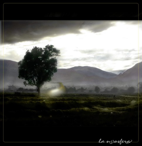 tree luz sunrise arbol tristeza alma air amanecer soul ligth aire arequipa elnoos