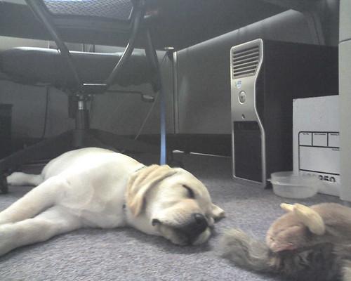 Daily Magnus: Asleep at Work