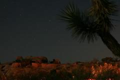 Jumbo Rocks at night