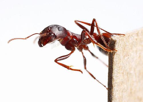 Jubil-ant
