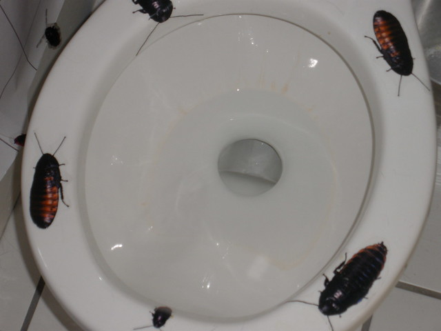 Cockroach bathroom flickr photo sharing for One cockroach in bathroom