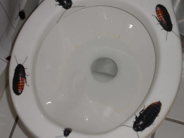 cockroach bathroom | Flickr - Photo Sharing!
