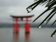 Miyajima Torii on a rainy morning