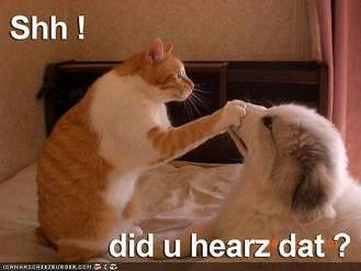 did you hearz dat