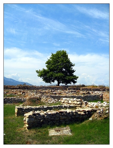 Tree of Dion