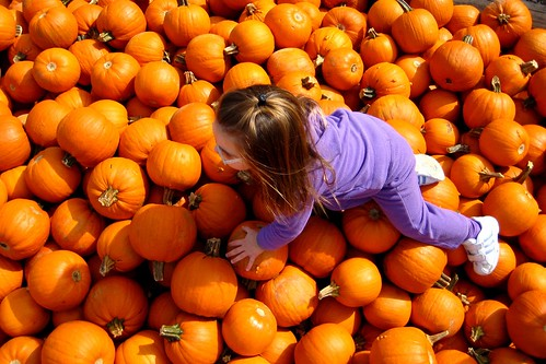 Pumpkin Search