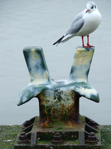 sea bird nature river steel seagull gull quay mooring bollard kingslynn mygearandmepremium mygearandmebronze mygearandmesilver mygearandmegold mygearandmeplatinum mygearandmediamond