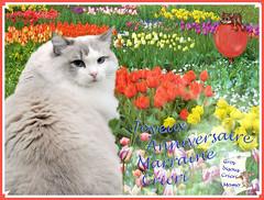 Joyeux Anniversaire Marraine Cricri Je Vais Cueillir Tout Flickr