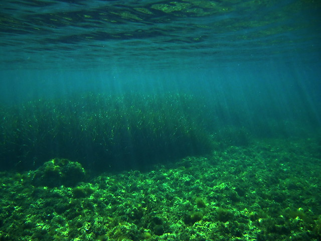 Fondo del mar verde explore chandal 39 s photos on flickr ch flickr photo sharing - Fotos fondo del mar ...