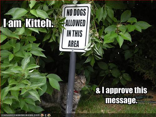 your-cat-approves-a-message-on-a-sign