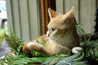 Beavis amongst the plastic ferns | by Darron Birgenheier