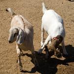 Valencia and Ranch 015