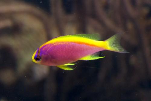 Small Fish Flickr Photo Sharing