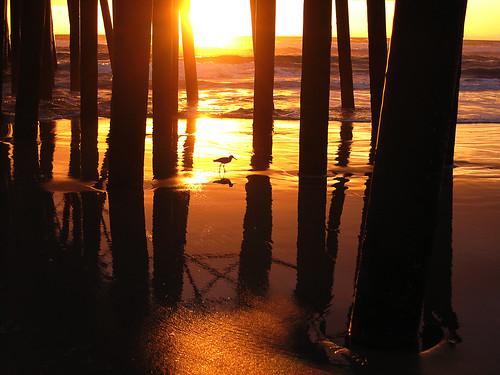 sunset bird pier oceansidepier
