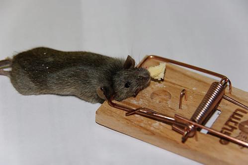 La souris prise au pi ge le blog de reinette - Piege a souris fait maison ...