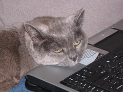Another view of Nermal on the laptop