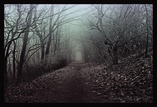 trees winter denmark path chapeau bec takeabow 100n glostrup bej aplusphoto infinestyle vestvolden betterthangood 100bf kirstenmlentoft sailsevenseas trolledproud trollieexcellence coppercloudsilvernsun