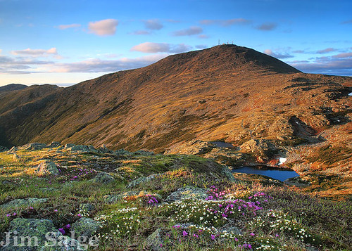 Alpine Flowers on Mount Monroe, Overlooking Mount Washington