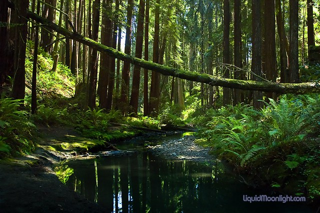 The Deep Dark Forest - Stillwater Cove State Park California