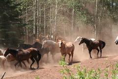 Latigo Ranch: Horse out to pasture
