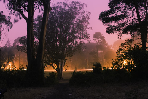Golden Gate Park Night Time Fog