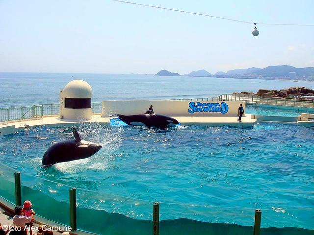 Kamogawa Sea World  Flickr - Photo Sharing!