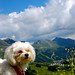 Maltese high above Obertauern in the Austrian Alps by Peace Correspondent