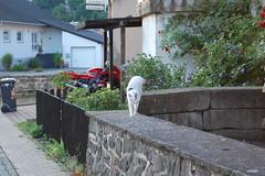 Rundgang durch Bubach 06.08.08