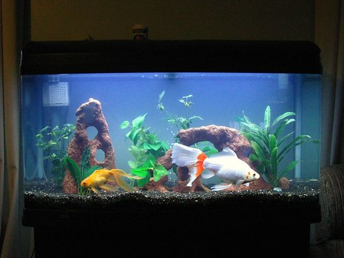 Fish tank clean how often clean fish tank 2017 fish for How to maintain fish tank