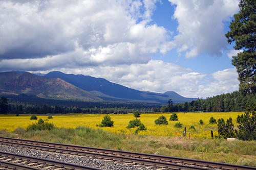 railroad arizona mountain southwest west flower forest tracks az flagstaff valley monsoon sunflower sanfranciscopeaks mountelden cotcbestof2008