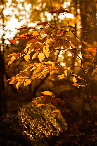 nikkor50mmf18 elephantrocksstatepark nikond300 autumnleavesfallsunlightmorning