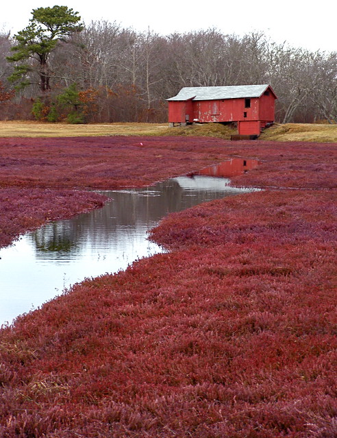 Map: Five Cranberry Bogs You Can Tour in Massachusetts