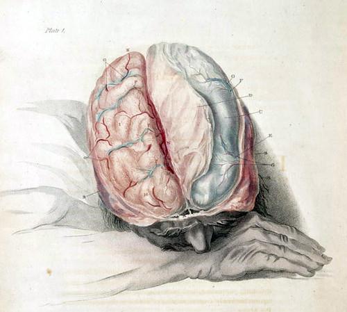 Charles Bell Anatomía del Cerebro 1802