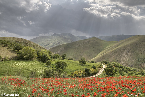 light red cloud mountain flower tree green grass canon landscape spring ray iran dream sigma poppy dreamy iranian 1770 hdr kurdistan sanandaj kavan kordestan 400d theperfectphotographer